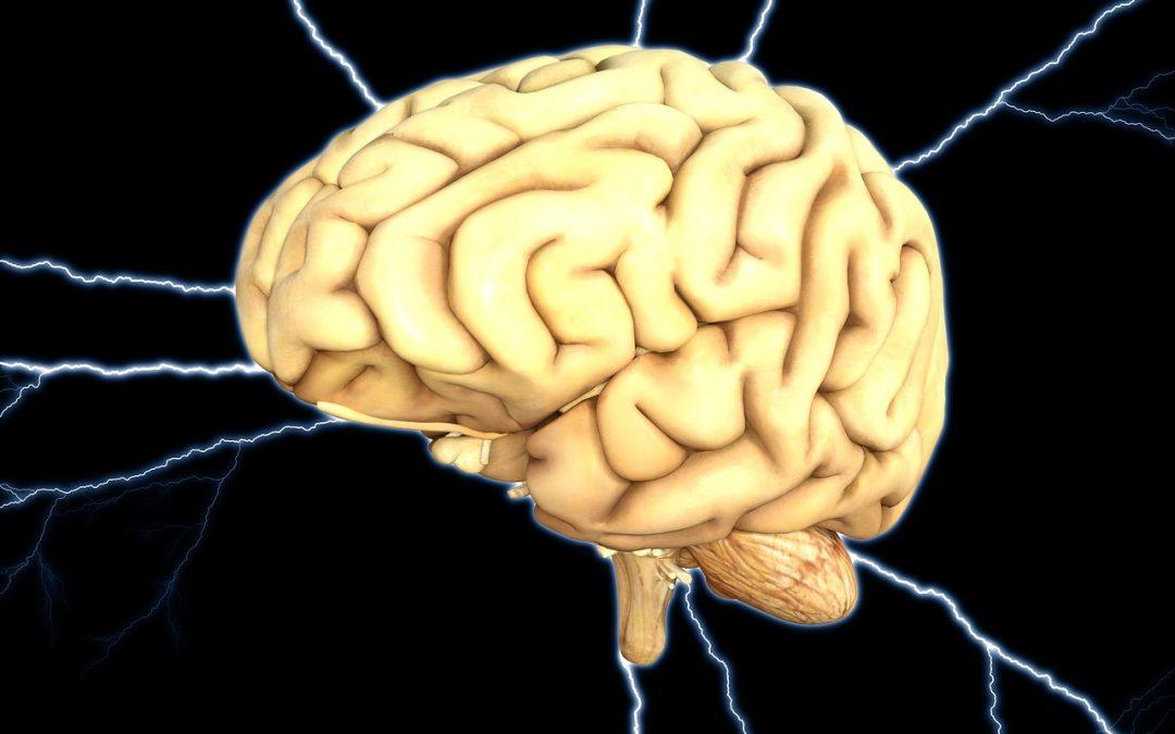 Una investigación apunta a un posible origen de la epilepsia o el autismo en un déficit de neuronas