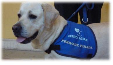 La asociación Afanya realiza terapia con perros para los chicos con TEA