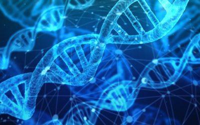 Identifican un regulador de la síntesis de proteínas que está afectado en la mayoría de casos de autismo
